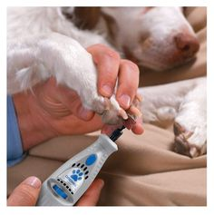 The Dremel Electrical Pet Grooming Kit is a wireless rotary tool that gently grinds down the claws of your pet! It's highly efficient and painless for your dog/cat! Dog Grooming Business, Grooming Kit, Poodle Grooming, Grooming Dogs, Dog Nail File, Best Nail Clippers, Dog Nails, Cat Dog, Nails At Home