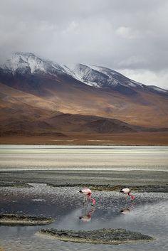 Altiplano, Bolivia, South America.