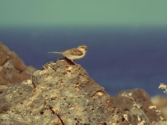 Birdie,Cape Verde 2014