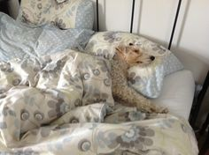 Ralph's sleepy time