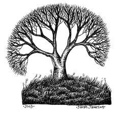 Resultados de la Búsqueda de imágenes de Google de http://www.inkandpen.co.uk/drawings/spreading_tree.jpg