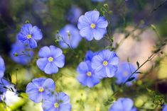 Zahradníkův kalendář na celý rok: kdy sít a sázet zeleninu, květiny, dřeviny? - Užitková zahrada Plants, Plant, Planets