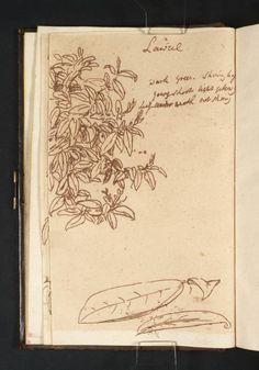 Joseph Mallord William Turner, 'Studies of Laurel Leaves' c.1800-1