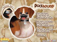 Beggin for Duckhound