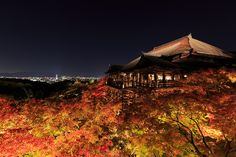 If you mention autumn, the first thing a large number of Japanese people would think of would be foliage.  The picture featured of the mountain covered in one sweep by brilliant foliage or autumn leaves is Kyoto's Kiyomizudera.  At night the trees are brightly lit up so the site of the foliage as well as the Kyoto night view at dusk is an exquisitely beautiful view that remains in one's heart.  #TsunaguJapan