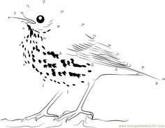 close look of brown thrasher dot to dot printable worksheet connect the dots