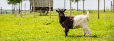 Der Sonnenhof - farm to visit animals