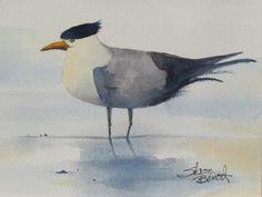 Corolla Tern - OBX - watercolor