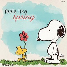 Charlie Brown Y Snoopy, Snoopy Love, Snoopy And Woodstock, Funny Weather, Winnie The Poo, Snoopy Comics, Joe Cool, Snoopy Quotes, Morning Inspirational Quotes