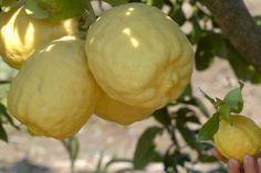 Non buttatele: ecco cosa si può fare con le bucce dei limoni