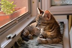 Sunday relaxed state of mind  (cute sunny window kitten) ☀ #cutenessoverload