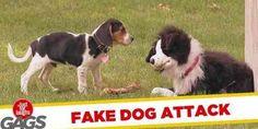 Viervoeters in de maling genomen door een pluche knuffel hondje. Hoe verleidelijk is het hondenkluif die bij het pluche hondje ligt.