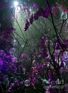 ✮ Enchanted Orchids Forest