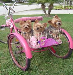 Bikes With Baskets That Are Hot Pink that pink bicycle basket