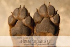 DIY All-Natural Protection For Dog Paws...http://homestead-and-survival.com/diy-all-natural-protection-for-dog-paws/