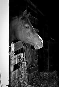 Horse / waiting to show