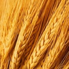 What's the Deal with Gluten? - have been wondering why gluten is so bad for you and why gluten-free is so popular. prob a little late on this research but better now then never.