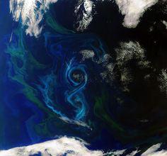El fitoplancton visto desde el espacio  En esta imagen del satélite Envisat se puede apreciar el crecimiento del fitoplancton en el sur del Océano Atlántico, a unos 600 kilómetros de las Islas Malvinas.  En la fotografía se puede apreciar en el azul de la figura en forma de ocho y en las manchas de color verde que salpican el océano.