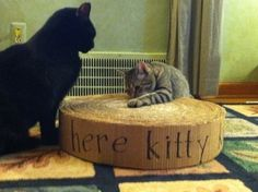 DIY kitty scratch pad from cardboard boxes good tutorial