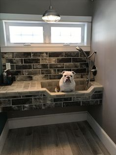 I need this dog wash station in my bathroom 🐾 Dog bath, raised basin with rem. I need this dog wash station in my bathroom 🐾 Dog bath, raised basin with removable shower head Pet Station, Dog Washing Station, Pole Barn House Plans, Pole Barn Homes, Animal Room, Pole Barn Designs, Puppy Room, Washroom, Bathroom Shelves