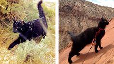 Millie, un chat exceptionnel adepte d'aventure et d'escalade