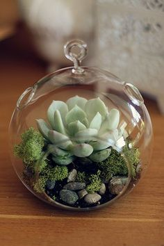 DIY Succulent Terrarium. I want to play with some succulents, but I'm afraid my little cat will eat them. This might be the perfect way to keep them protected and him out of trouble!