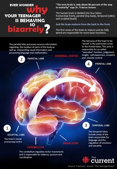 The teenage Brain: Uniquely powerful, vulnerable and not fully developed