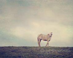 Dreamy White Horse in a Meadow by Pretty Petal Studio on Etsy