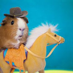 Fuzzberta might just rock the Western look better than anyone.