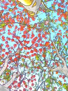 Fire Tree with a touch of Filter