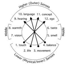 12 senses anthroposophy