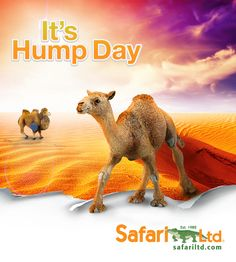 We love Wednesdays at #SafariLtd because we get to hang out with our two favorite camels; Bactrian and Dromedary. Happy Hump Day to all of our ‪#‎Safariologists‬. Wishing you an amazing rest of the week. Want to add them to your collection? Visit our website at www.safariltd.com #‎lovesafari‬ ‪#‎humpday‬ #wedesnday #figurines #wildlife