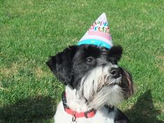 His 1st birthday!