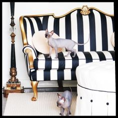 Love the Victorian couch w/ new striped fabric. Black and white chic!!!!!