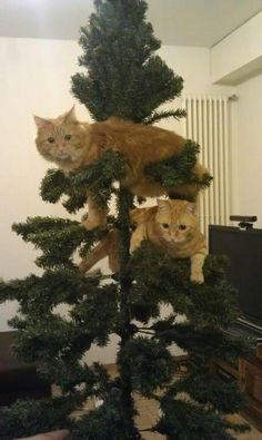 Things do not bode well for any ornaments put on this tree....