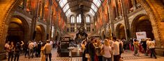 The National History Museum represents one of London's most beautiful landmark buildings. The museum displays as its main highlights the popular dinosaurs and mammals galleries.