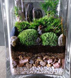 Simple jardin paysage Terrarium Cube Solution par DoodleBirdie