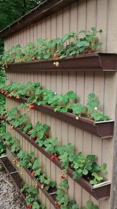 Vegetable Garden Design, Vegetable Gardening, Organic Gardening, Gardening Tips, Container Gardening, Raised Vegetable Garden Beds, Cheap Raised Garden Beds, Fine Gardening, Gardening Quotes