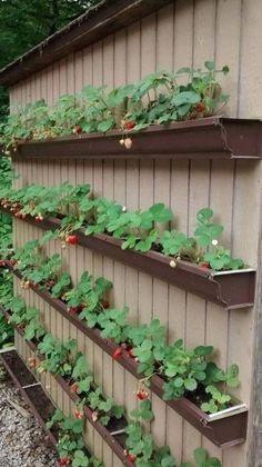 Vegetable Garden Design, Vegetable Gardening, Gardening Tips, Organic Gardening, Small Space Gardening, Raised Vegetable Garden Beds, Raised Bed Gardens, Small Garden Raised Beds, Fine Gardening