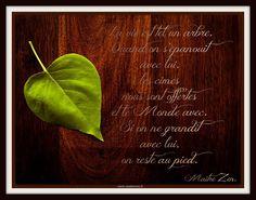 L'arbre de la vie. - Le site de Maître Zen