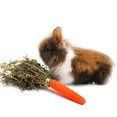 Brinquedo para Hamster Alfanoura Cia Dos Coelhos - MeuAmigoPet