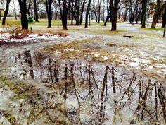 10 febr. 2014, rest av vinter og fuglesang i trærne