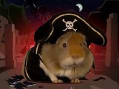 This is what happens when you pin late at night: Guinea Pirate #2! Yay!