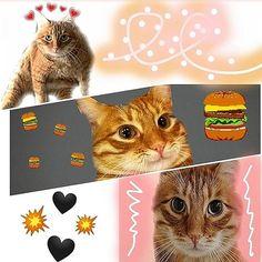 Оууу Это просто очень ужасно  Как всегда идея в моей голове была красивой а в...  Оууу Это просто очень ужасно  Как всегда идея в моей голове была красивой а в реальности  Но все же.. это работа с Тигрой #тигра#брайнмапс#еда#кот#броен#tigra#cat#brianmaps Cats, Animals, Gatos, Animales, Kitty Cats, Animaux, Animal Memes, Cat Breeds, Kitty
