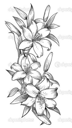 50 Arm Floral Tattoo Designs for Women 2019 - Page 19 of 50 - Flower Tattoo Designs - Orchideen Lilies Drawing, Floral Drawing, Drawing Flowers, Flower Drawings, Lilly Flower Drawing, Flower Design Drawing, Orchid Drawing, Flower Pattern Drawing, Painting Flowers