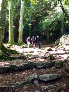 Stroll in the Sainte Baume forest, to the grotto of Marie-Madeleine.