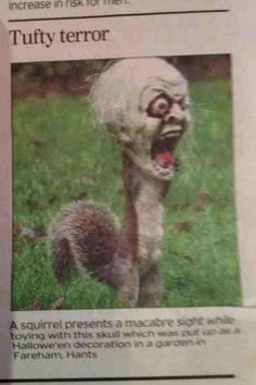 "This squirrel got his head stuck in a halloween decoration, scared the entire neighborhood.  One man said, ""It was the scariest thing I've ever seen"".  Hahahahaha."