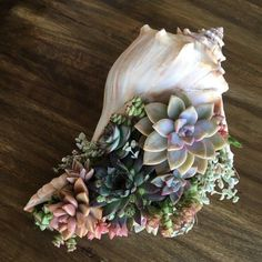 Succulent Gardening, Planting Succulents, Container Gardening, Planting Flowers, Gardening Tips, Succulent Ideas, Succulent Planters, Potted Plants, Succulent Gifts