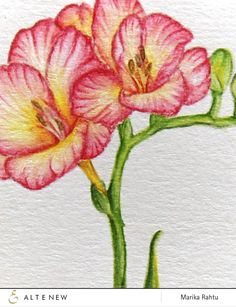 Me and Minime crafting: Altenew July 2015 Blog Hop. Colored with inktense pencils.