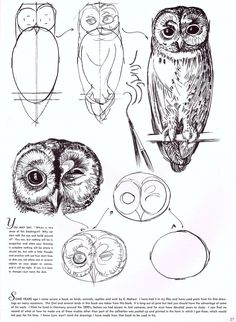 How to draw an owl:)